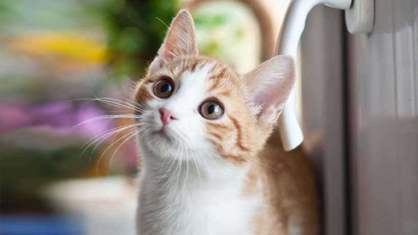 clean-dried-cat-pee